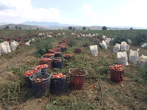A partial overview of the Turkish industry - Tomato News